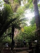 Admiring the Giant Rata Tree