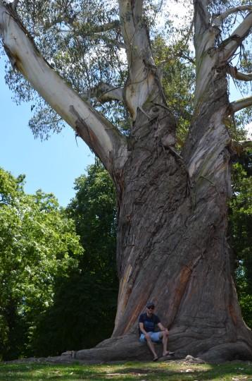 NZ grows gumtrees too!
