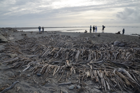 Driftwood wave