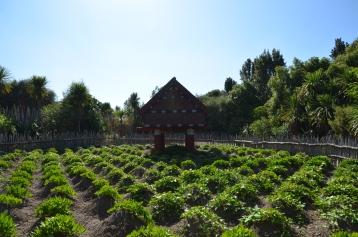 Maori Garden
