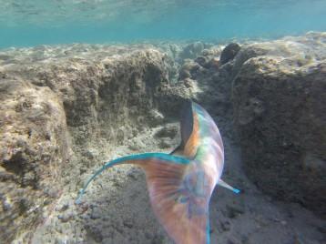 Pretty swish fish