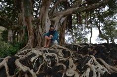 Kadin under a tree
