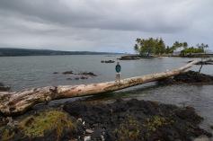 Kadin on a log