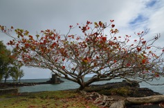 Awesome red tree