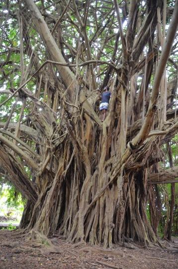 Kadin in the tree