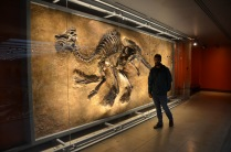 Awesome fossil wall