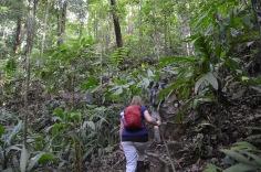 Jungle trekker