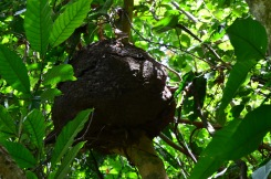 Huge Termite Nest