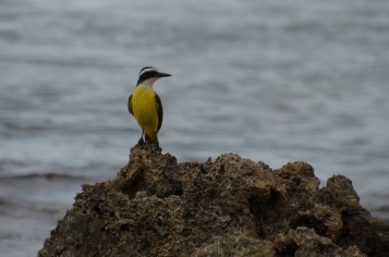 Pretty bird on the rock.