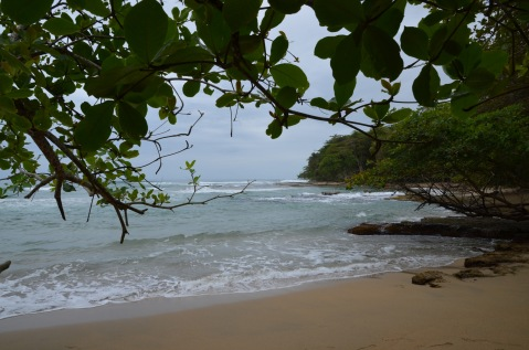 Beach by the jungle