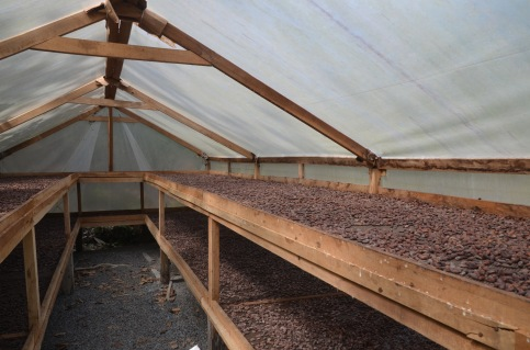 Roasting house - The beans tasted just like cocoa powder