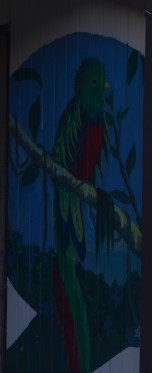 The Resplended Quetzal!