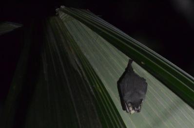 tent bat