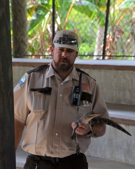 """Alligator Show - """"Snappy"""" the baby alligator"""