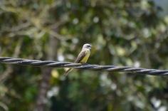 Yellow bird too!
