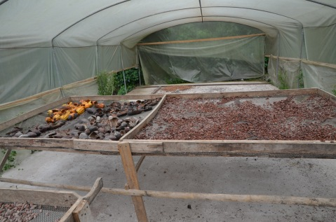 Cacao roasting house ...smelled so good!