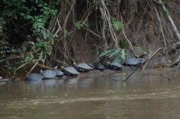 Turtle line up