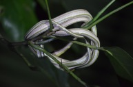 Snake rope