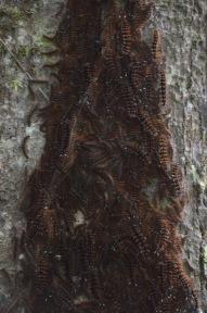 Caterpillars on a tree trunk