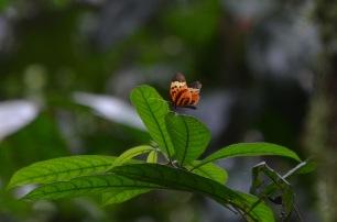 Butterfly landing on a leaf