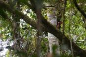 Woodpecker in the jungle