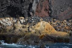 Marine Iguana Rock