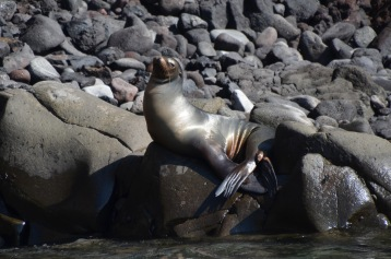Sea Lion posing for the camera