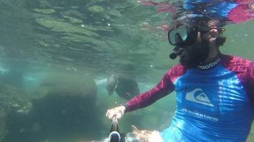 Sea Lion coming to Kadin