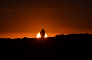 Setting sun and the Galapagos Hawk