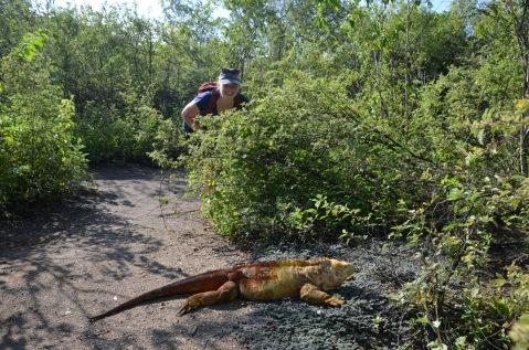 Gemma sneaking up on the land iguana