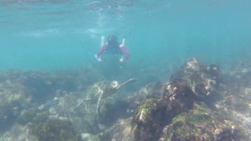 Kadin following the turtle