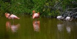 Flamingoes!
