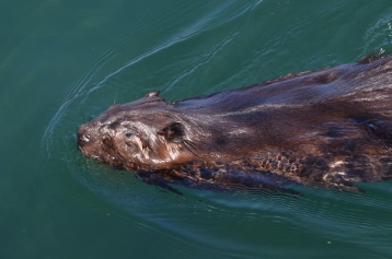 Beaver friend