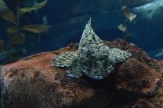 Rock Fish I