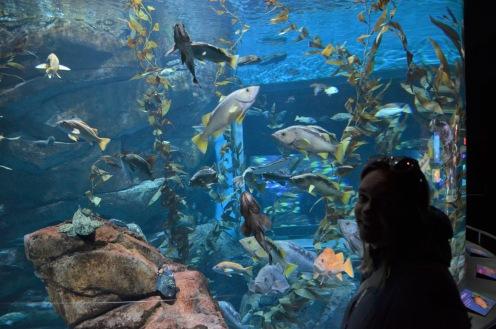 Gemma and many fish