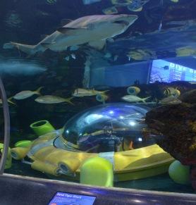 Kadin in the submarine