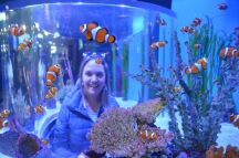 Gemma and many nemo fish