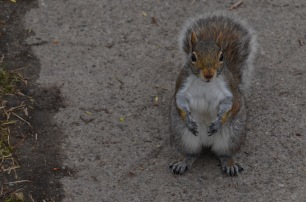 Squirrel posing for the camera