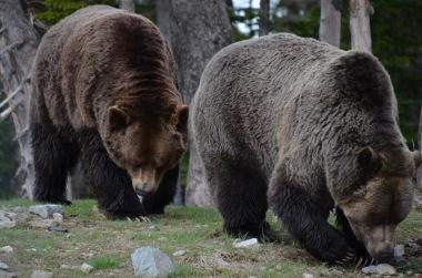 Two bears!