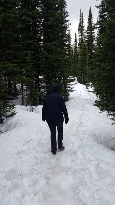Gemma walking slowly in the ice