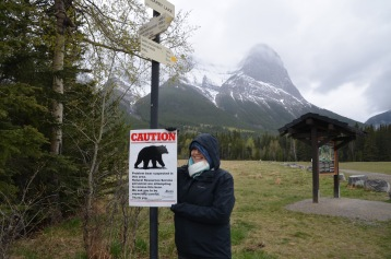 Too cold for bears
