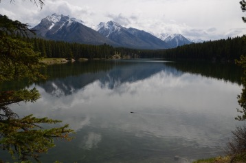 Beaver swimming across the lake