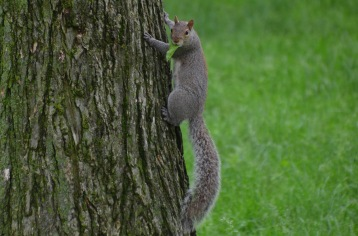 Squirrell eating and climbing