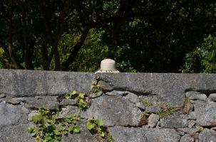 Gemma sitting behind the wall