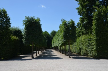 Many rows of trees