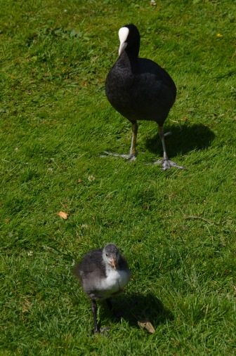 How coot!