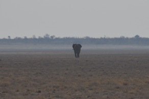 First elephant sighting! behind only...