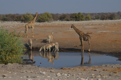 Sharing the waterhole