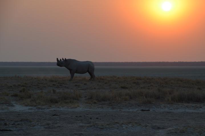 Proud Rhinoceros