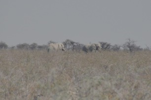 Elephants in the distance